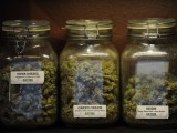 NEATO MOSQUITO Special Report: Shopping for Legal Weed in Colorado